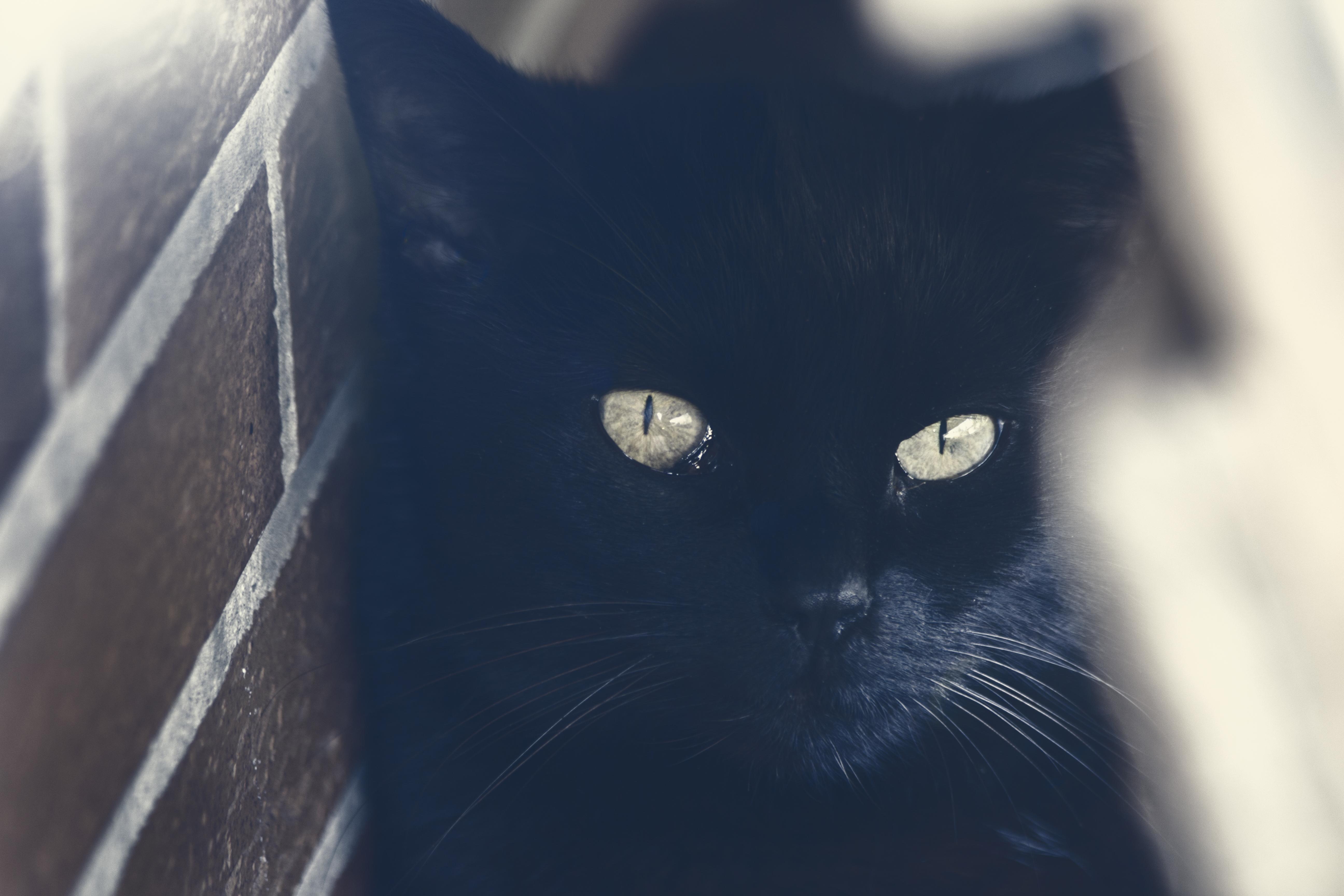 Ein Kuschelkissen für die Katze - ein Kissen für die Fensterbank (Werbung)